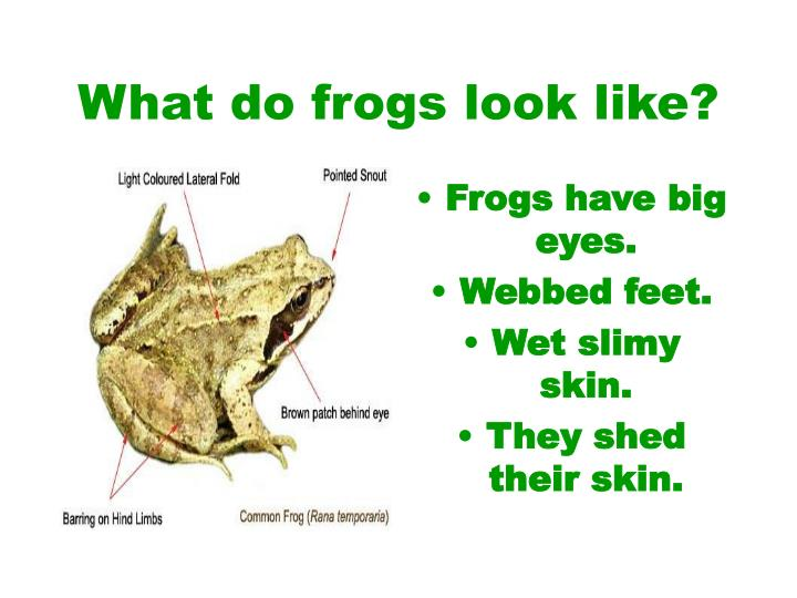 What do frogs look like
