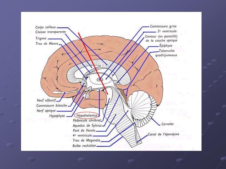 Etiologie des fievres