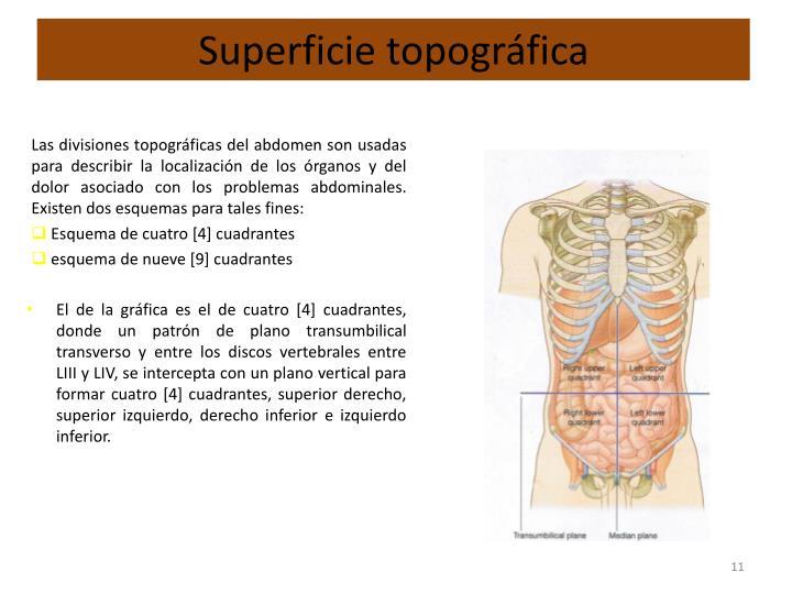 PPT - ANATOMIA SUPERFICIAL DEL ABDOMEN PowerPoint Presentation - ID ...
