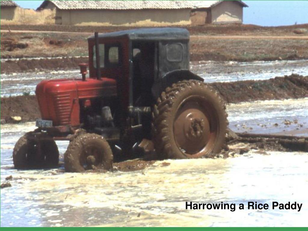 Harrowing a Rice Paddy