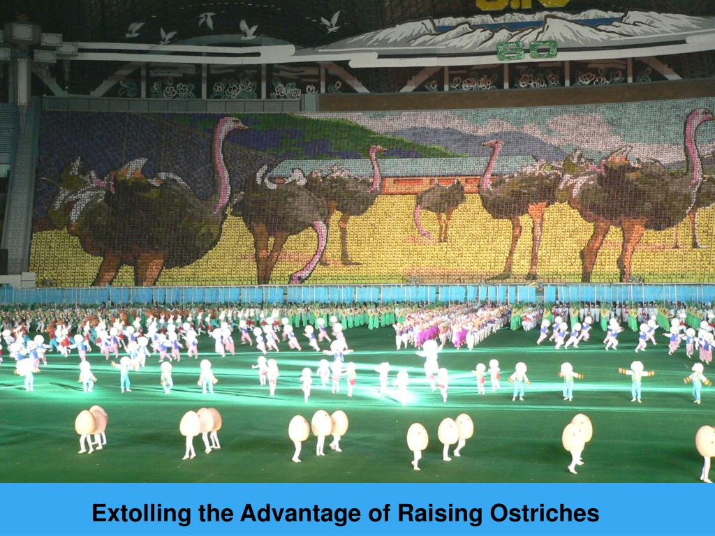 Extolling the Advantage of Raising Ostriches