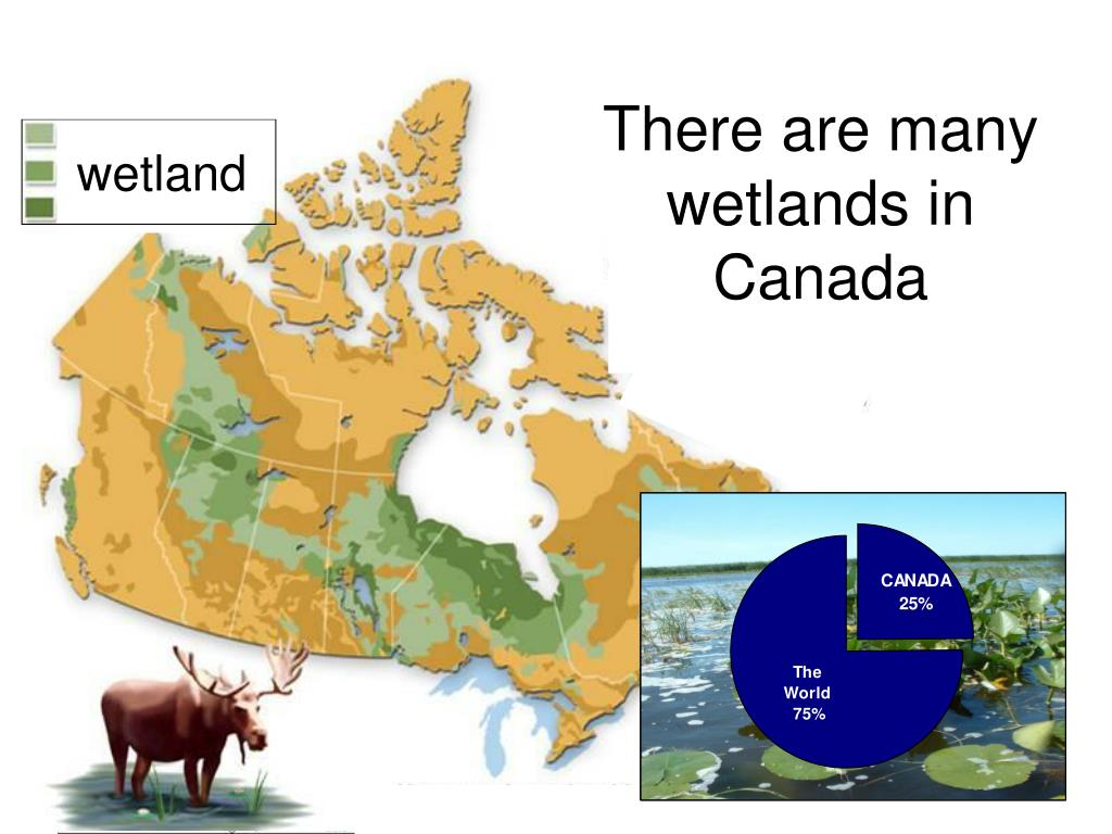 There are many wetlands in Canada
