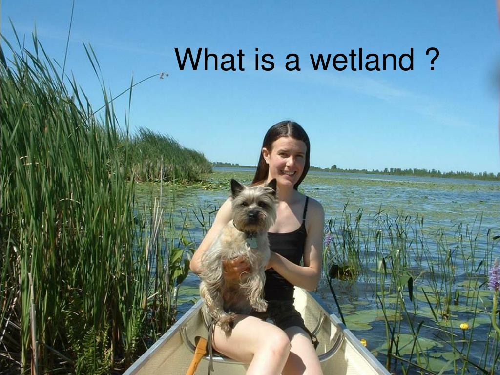 What is a wetland ?