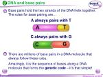 dna and base pairs1