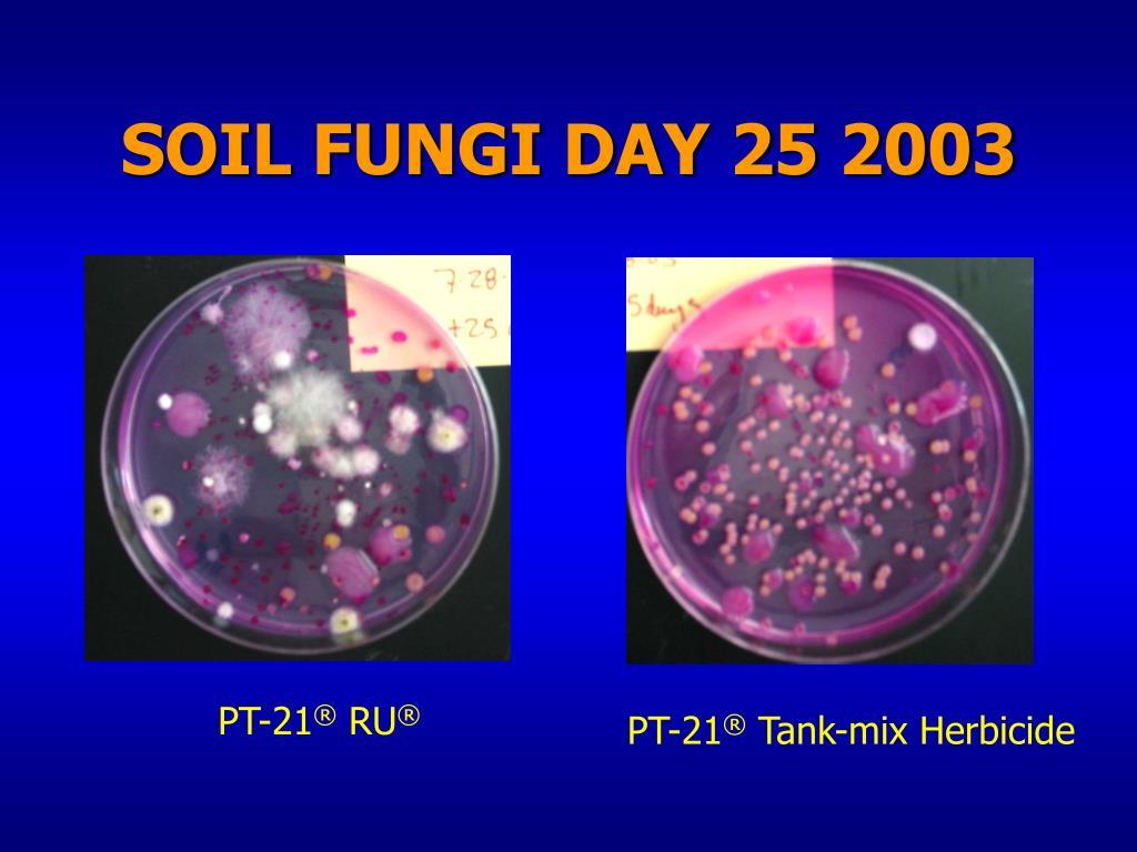 SOIL FUNGI DAY 25 2003