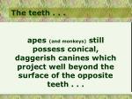 the teeth14