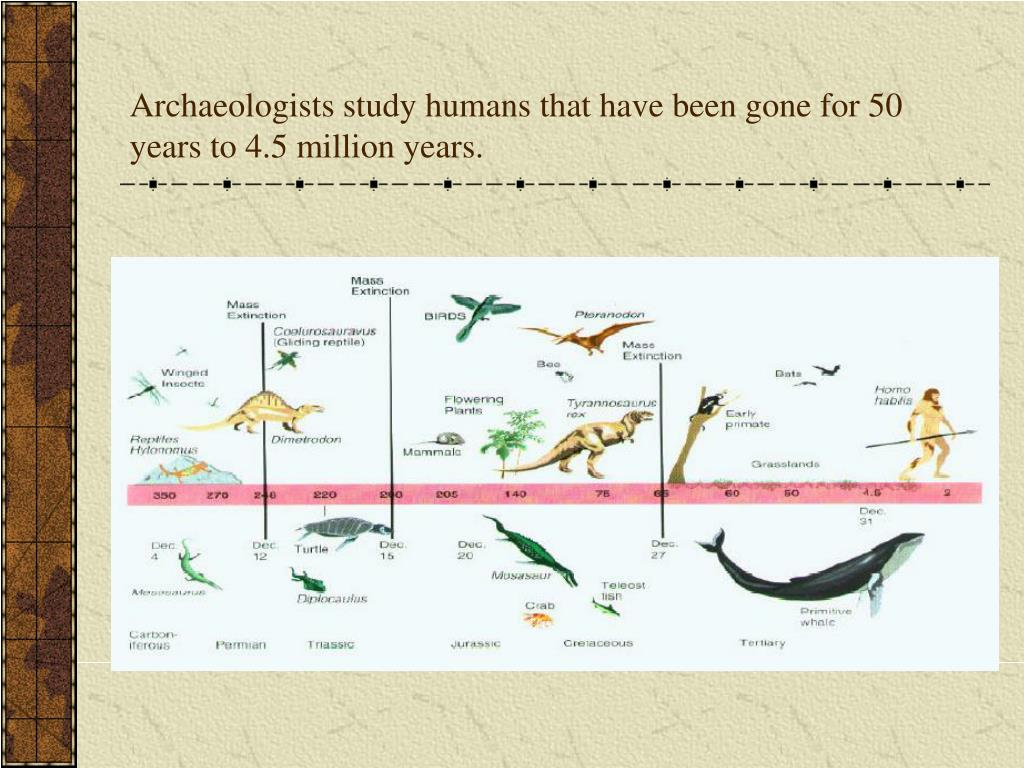 Archaeologists study humans that have been gone for 50 years to 4.5 million years.