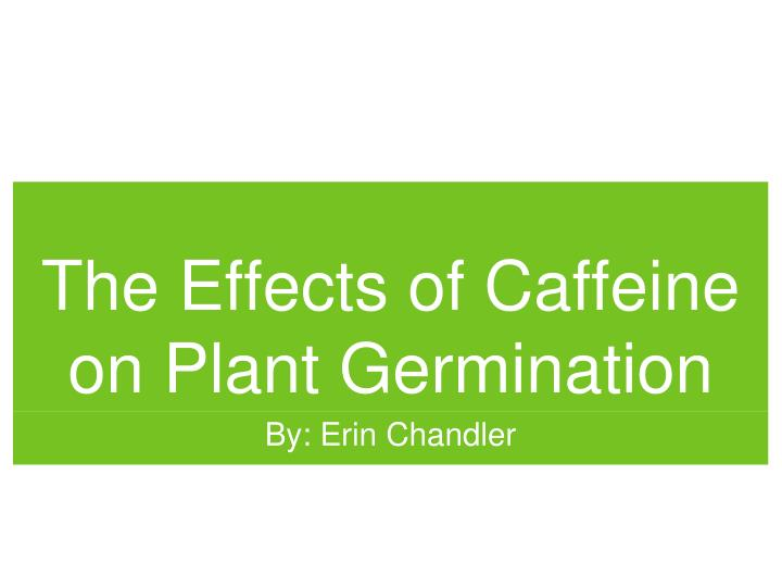 The effects of caffeine on plant germination