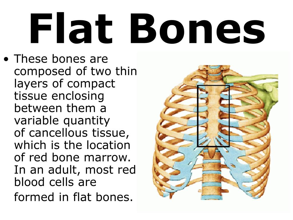 PPT - 7th Grade Unit 5: The Structure and Function of Body ...