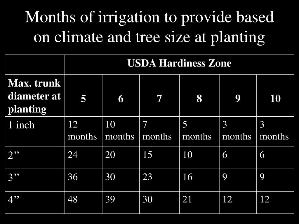 Months of irrigation to provide based on climate and tree size at planting
