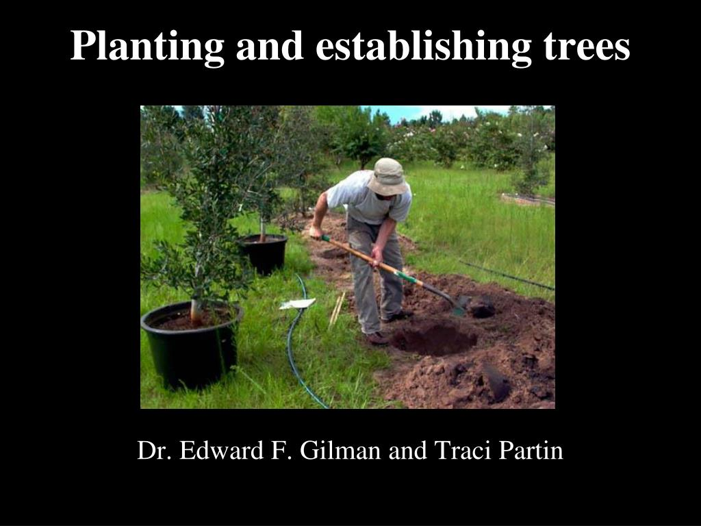 Planting and establishing trees