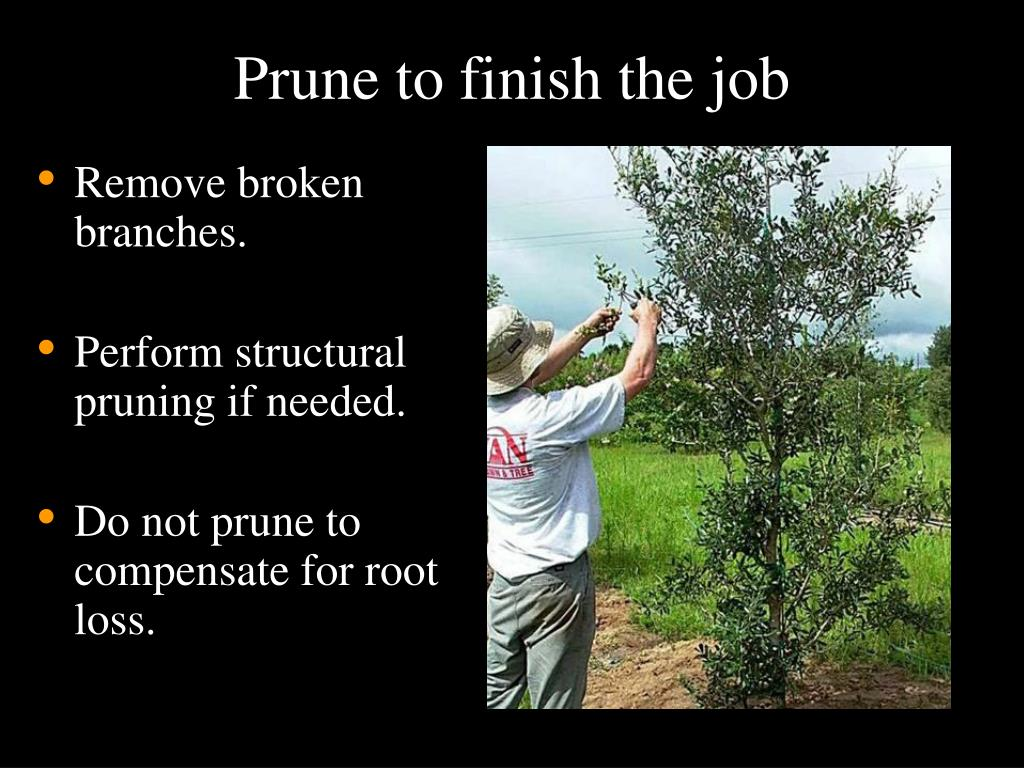 Prune to finish the job