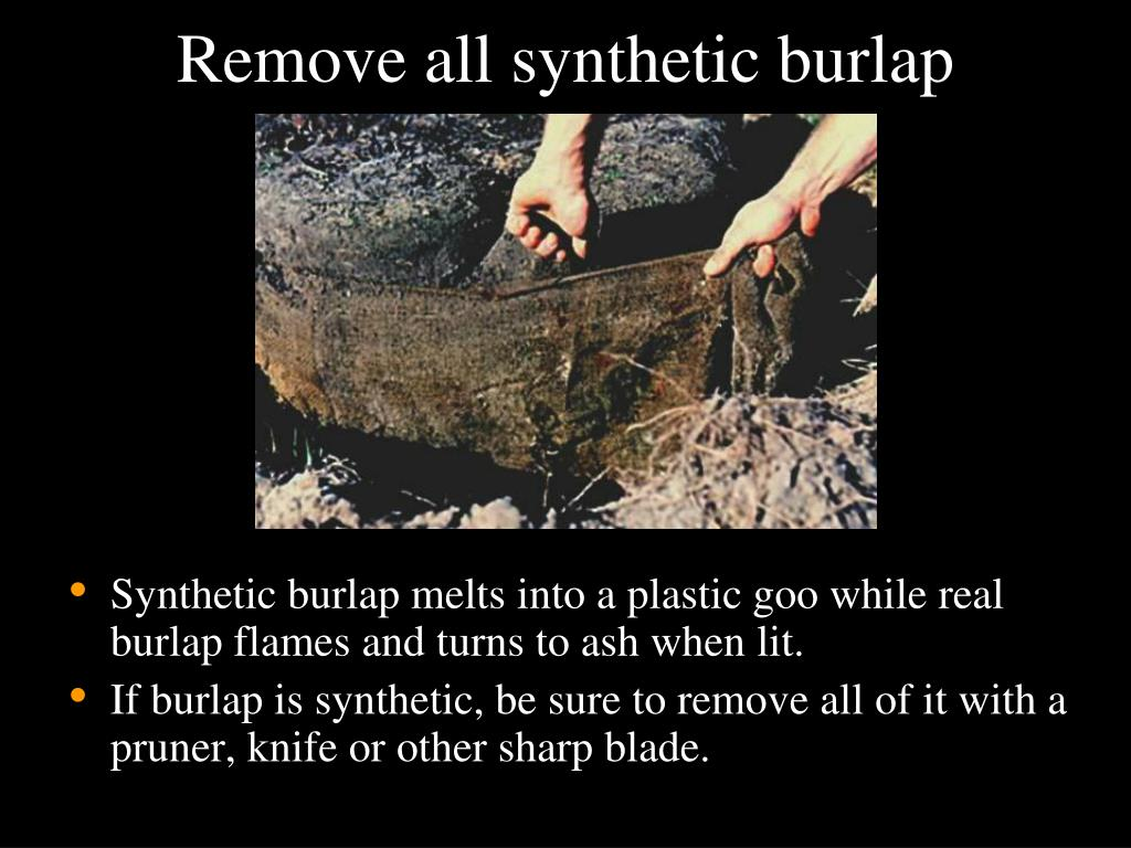 Remove all synthetic burlap