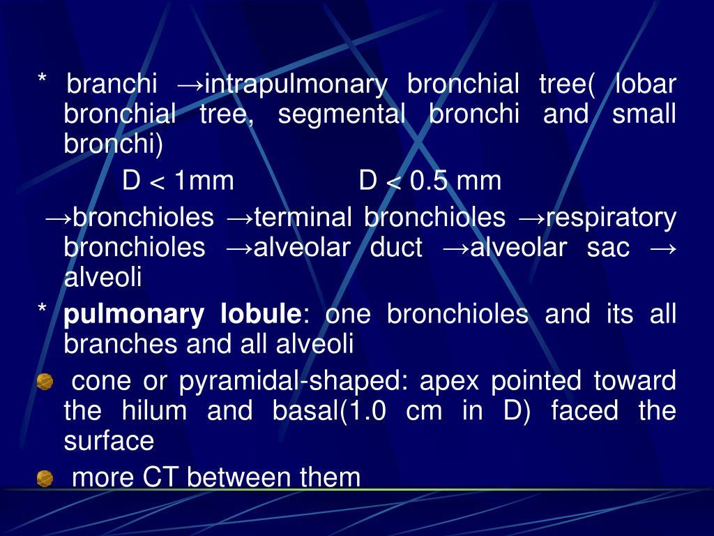 * branchi →intrapulmonary bronchial tree( lobar bronchial tree, segmental bronchi and small bronchi)