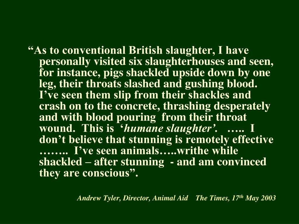 """""""As to conventional British slaughter, I have personally visited six slaughterhouses and seen, for instance, pigs shackled upside down by one leg, their throats slashed and gushing blood.  I've seen them slip from their shackles and crash on to the concrete, thrashing desperately and with blood pouring  from their throat wound.  This is  '"""