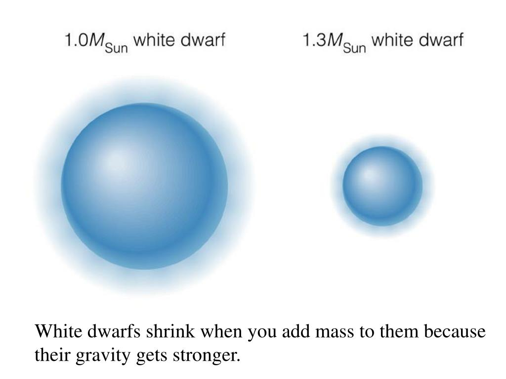 White dwarfs shrink when you add mass to them because their gravity gets stronger.