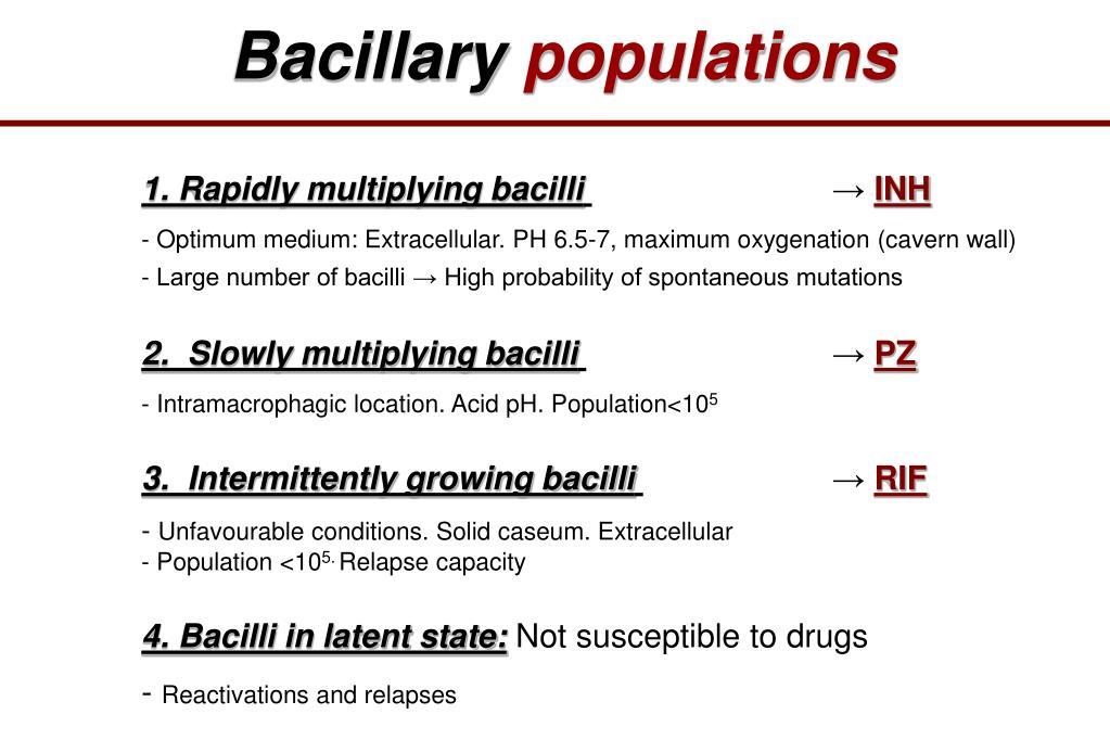 Bacillary