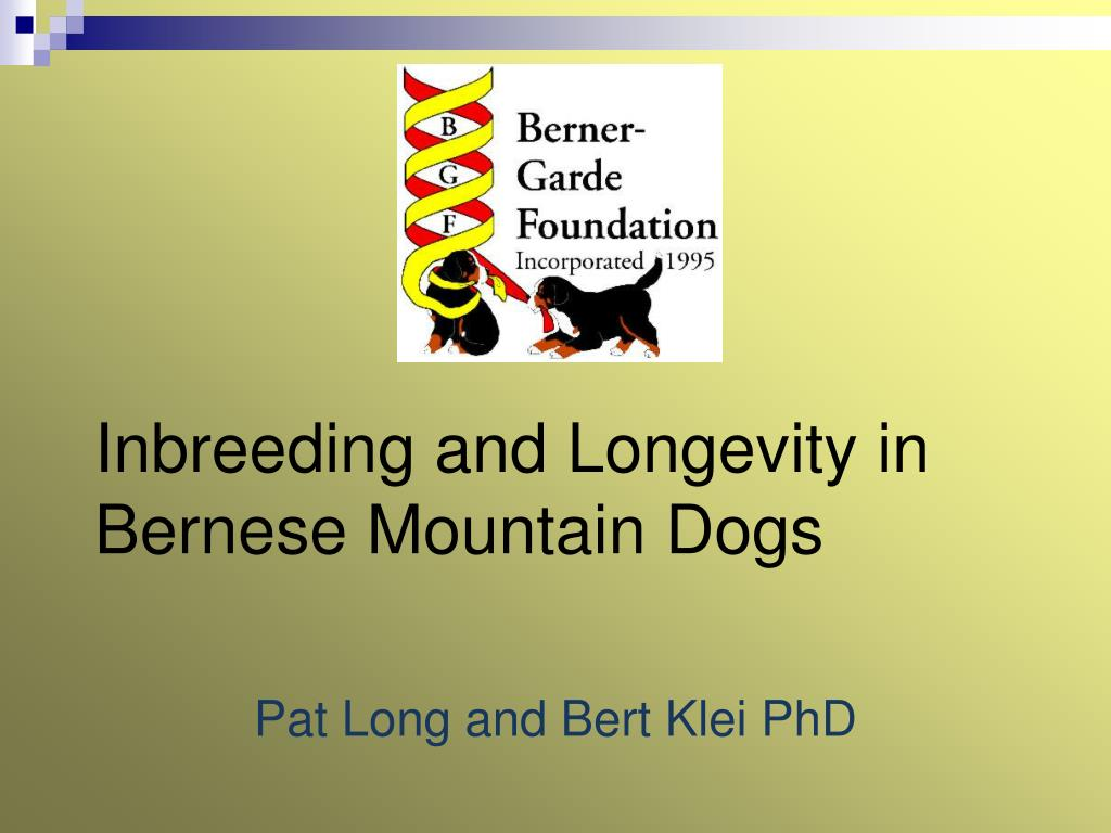 inbreeding and longevity in bernese mountain dogs l.