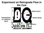 experiment on retrograde flow in the cow
