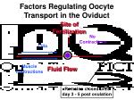 factors regulating oocyte transport in the oviduct31