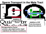 sperm transport in the male tract4