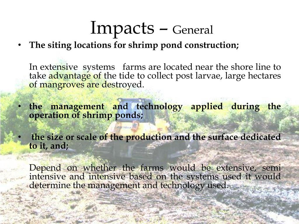 PPT - Effects of Shrimp farming on Mangroves PowerPoint