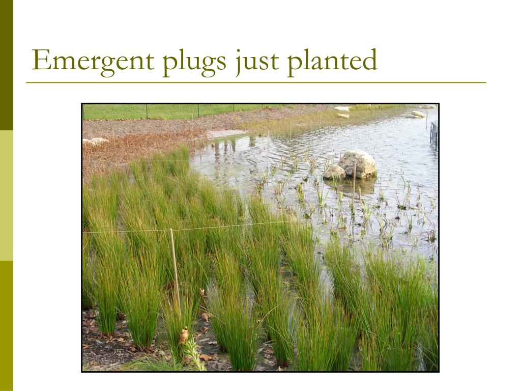 Emergent plugs just planted