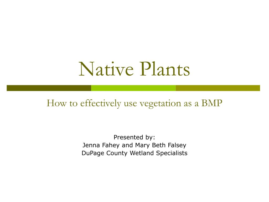 native plants l.