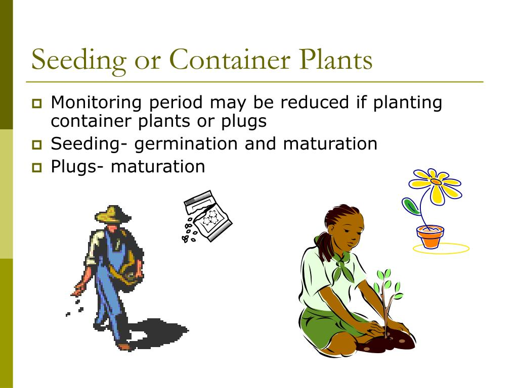 Seeding or Container Plants