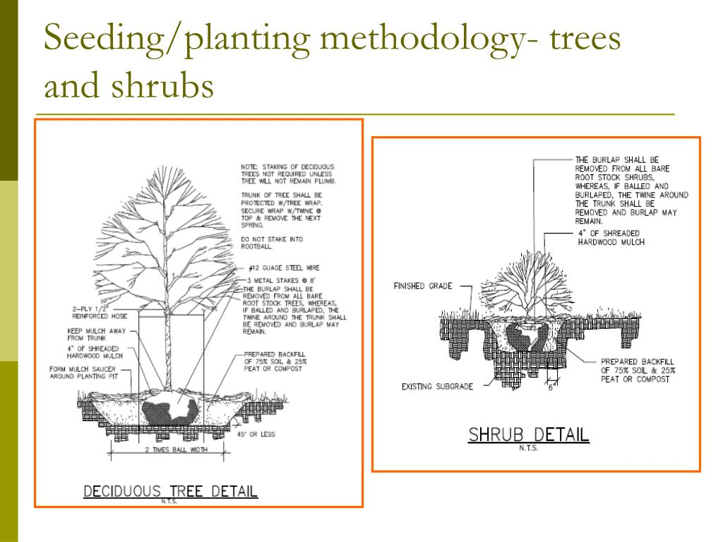 Seeding/planting methodology- trees and shrubs