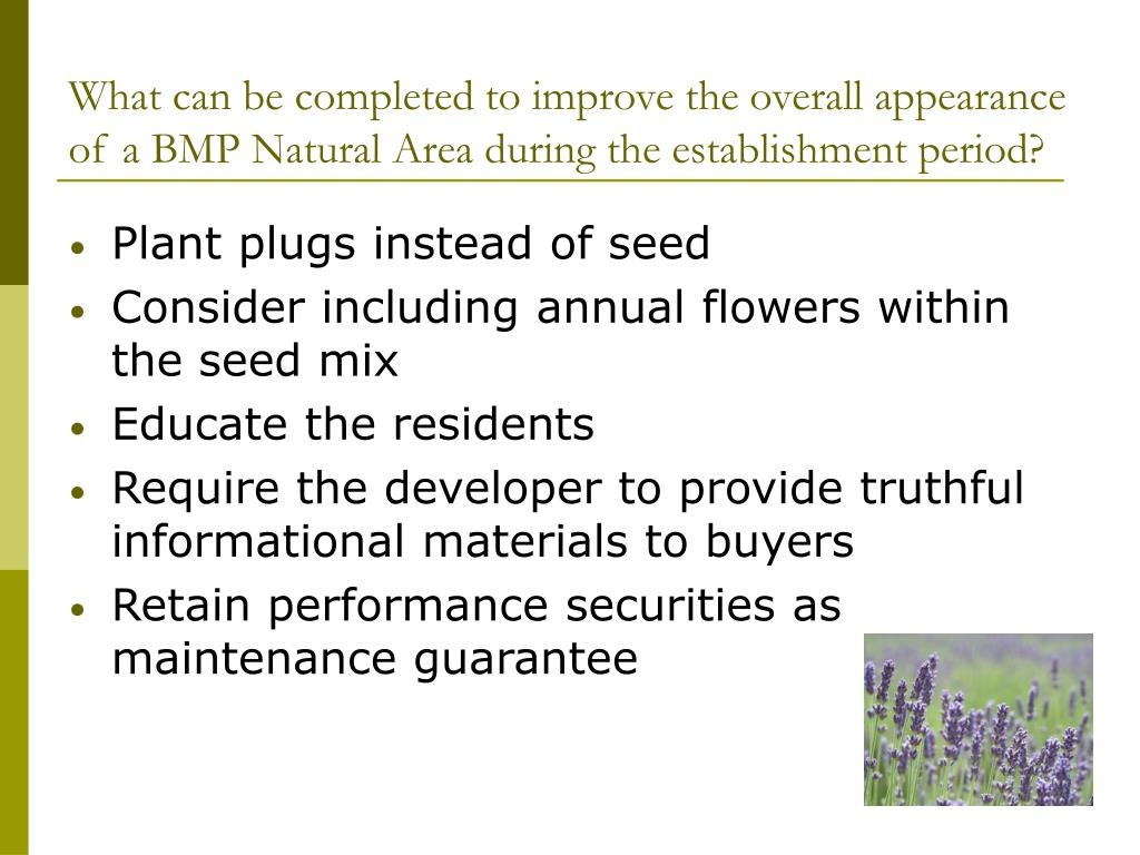 What can be completed to improve the overall appearance of a BMP Natural Area during the establishment period?