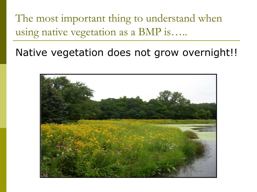 The most important thing to understand when using native vegetation as a BMP is…..
