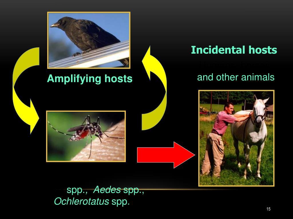 Incidental hosts