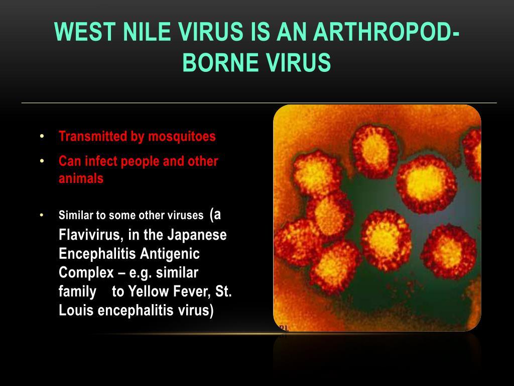 West nile virus is an Arthropod-Borne virus