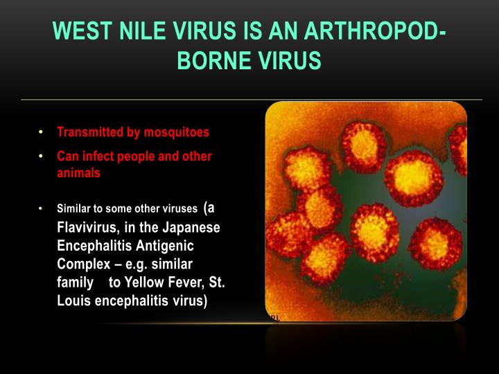 West nile virus is an arthropod borne virus