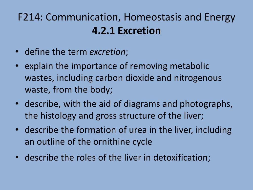 ornithine cycle explained