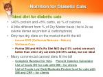 nutrition for diabetic cats19