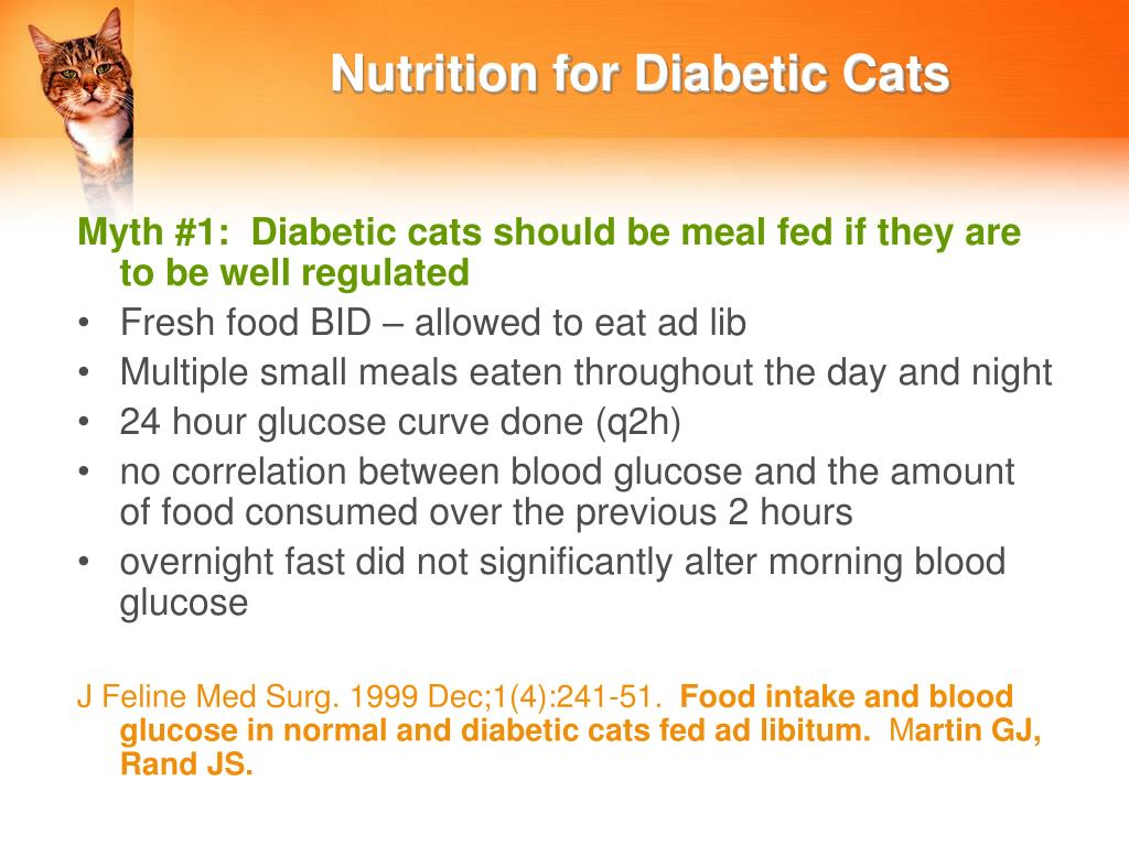 Nutrition for Diabetic Cats
