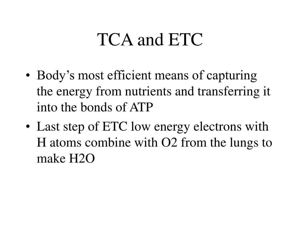 TCA and ETC