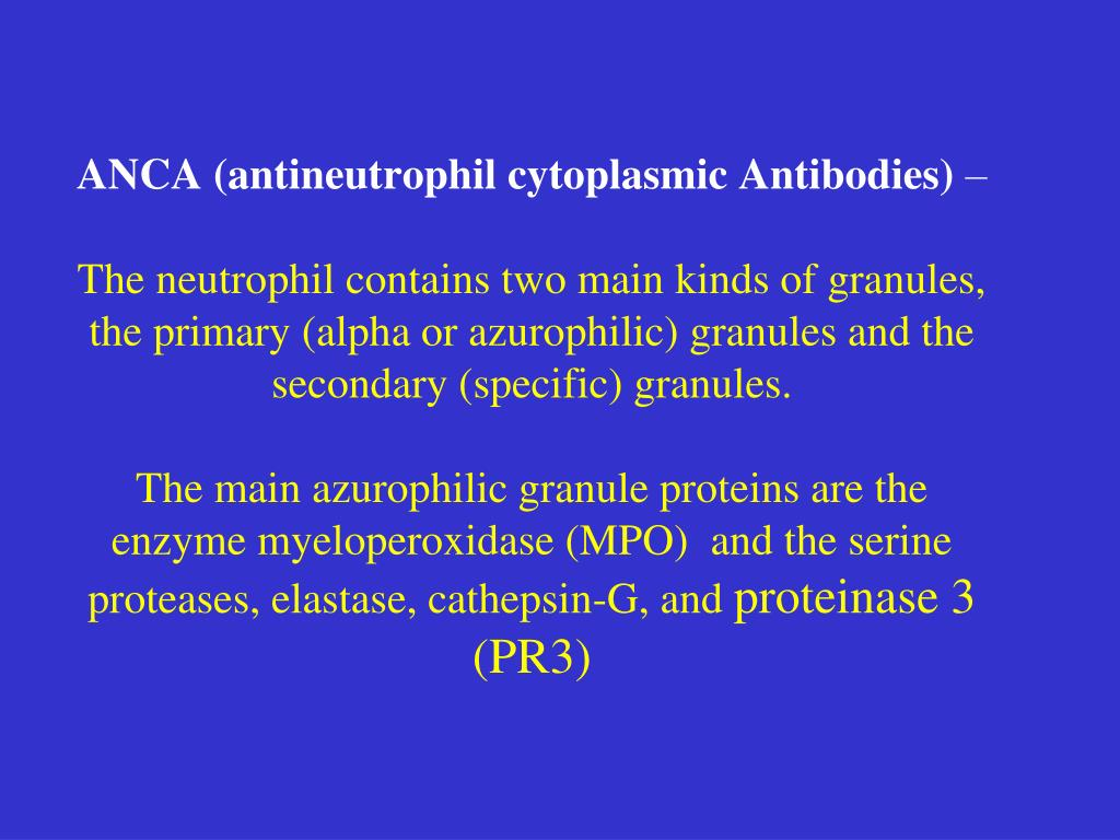 ANCA (antineutrophil cytoplasmic Antibodies)