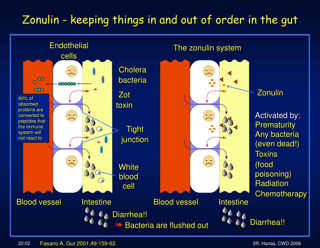 The zonulin system