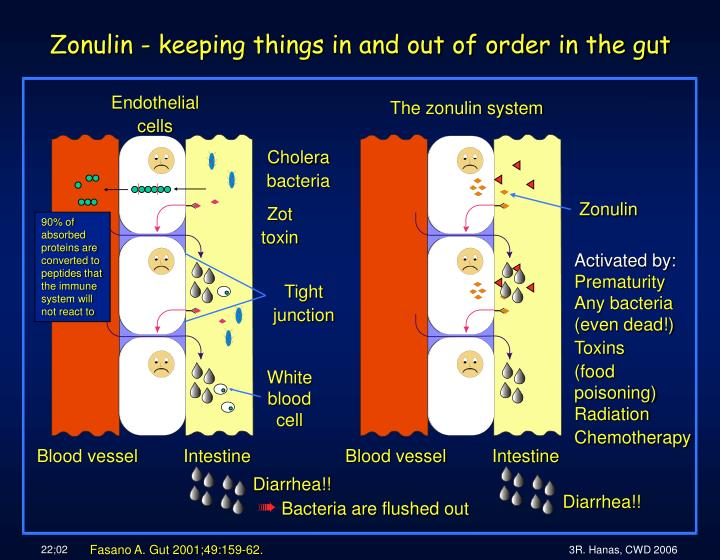 Zonulin keeping things in and out of order in the gut
