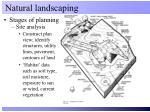 natural landscaping4
