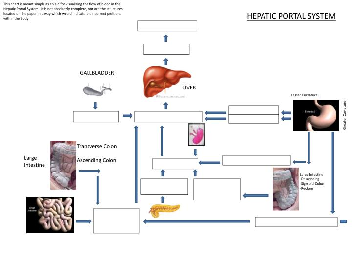 PPT - HEPATIC PORTAL SYSTEM PowerPoint Presentation - ID:678222