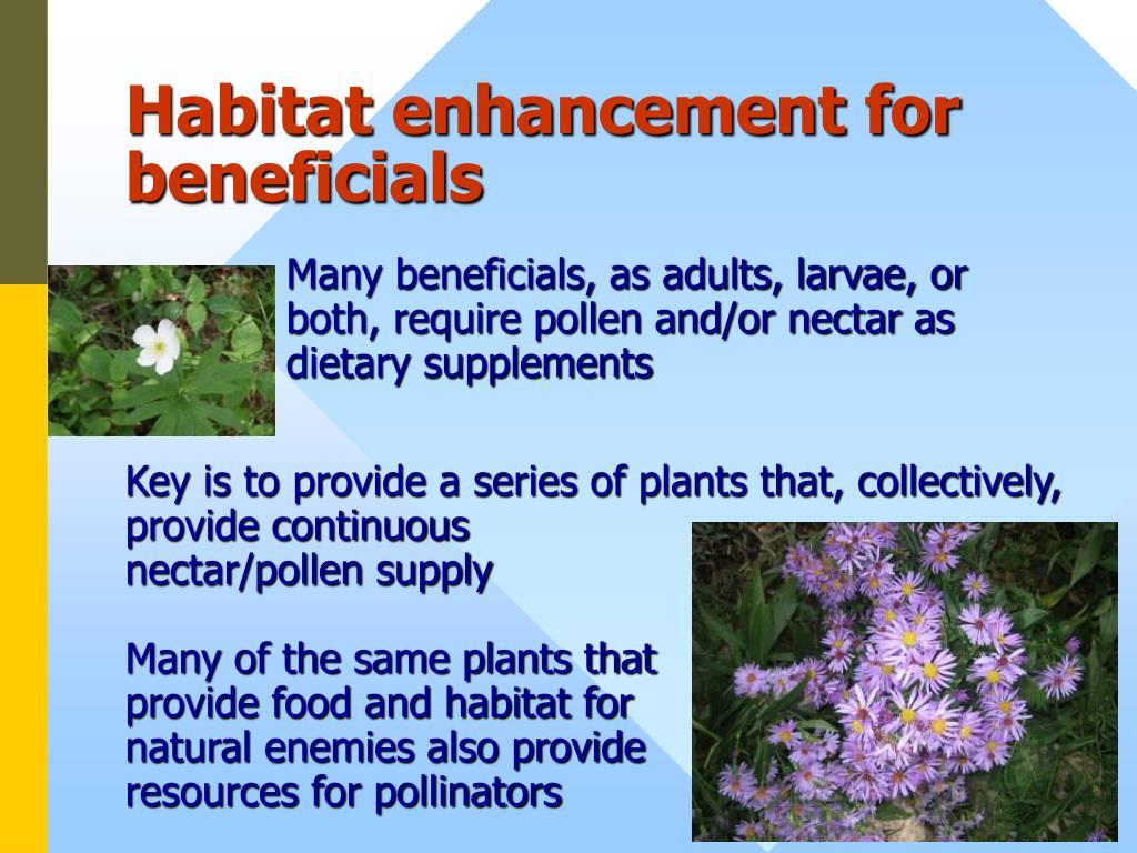 Habitat enhancement for beneficials
