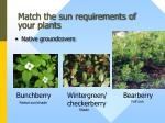 match the sun requirements of your plants