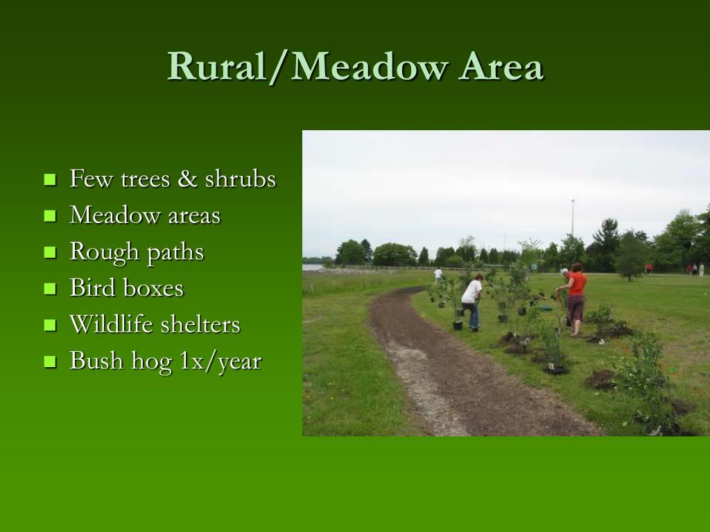 Rural/Meadow Area