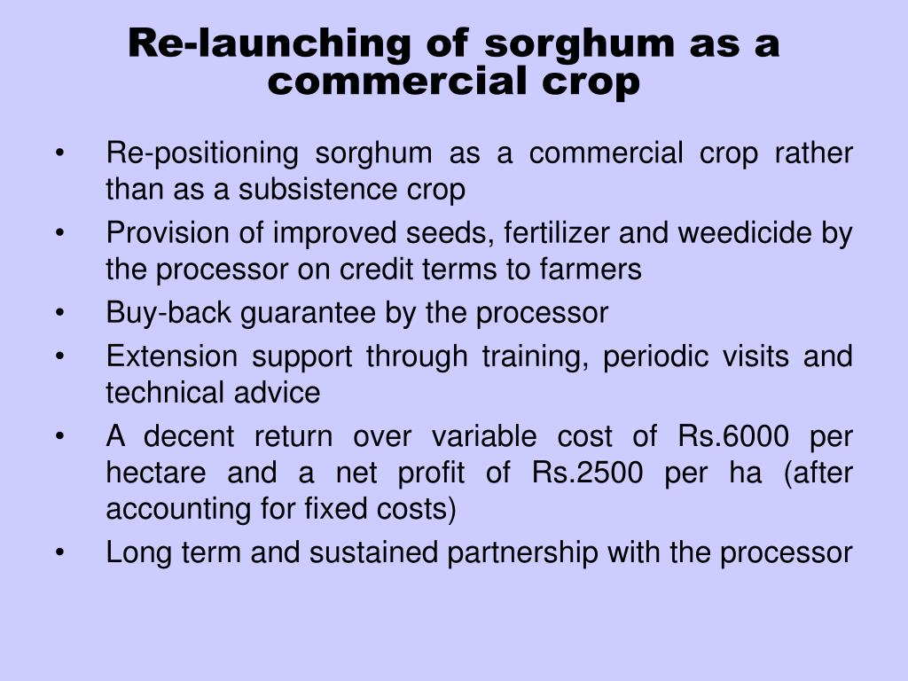 Re-launching of sorghum as a commercial crop