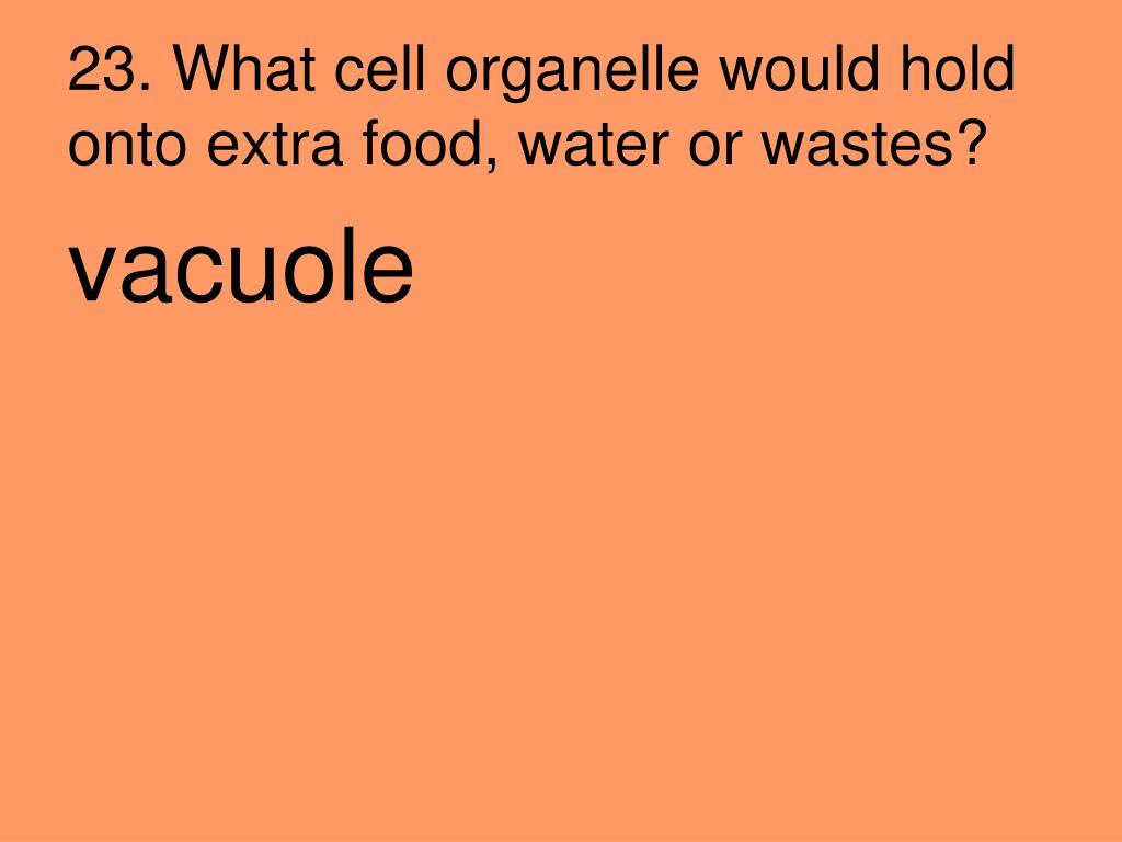23. What cell organelle would hold onto extra food, water or wastes?