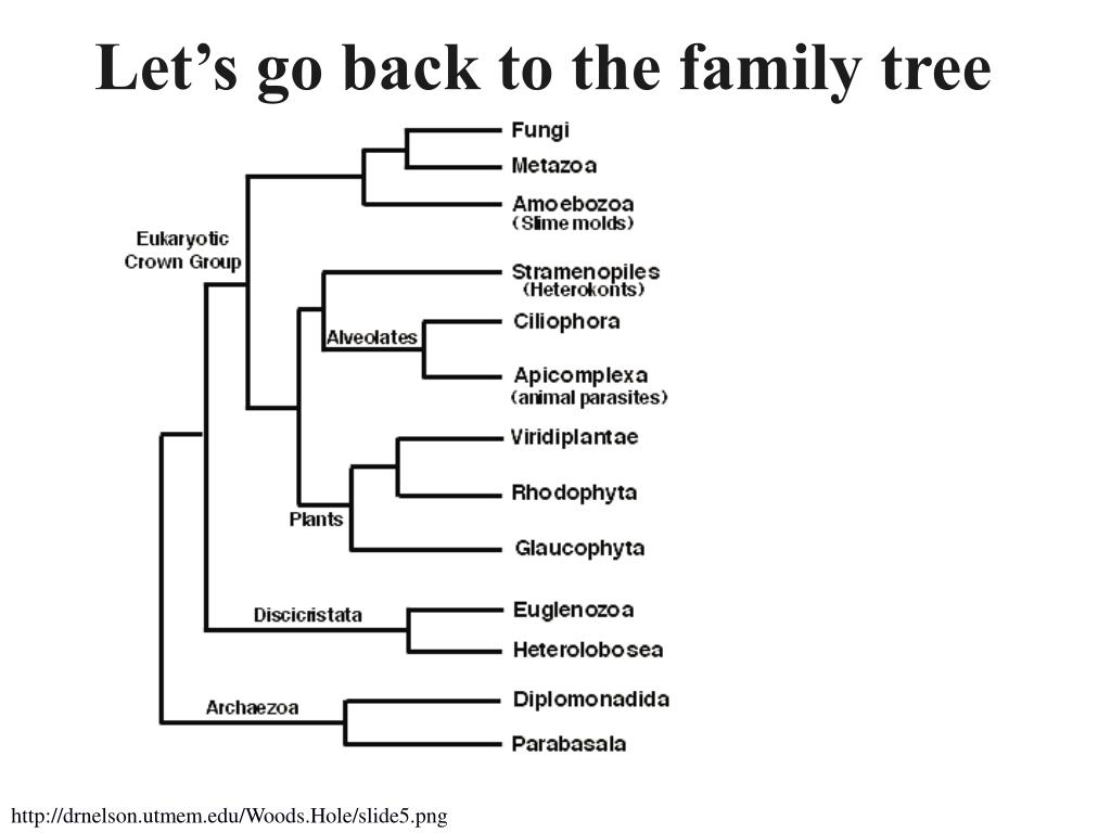 Let's go back to the family tree
